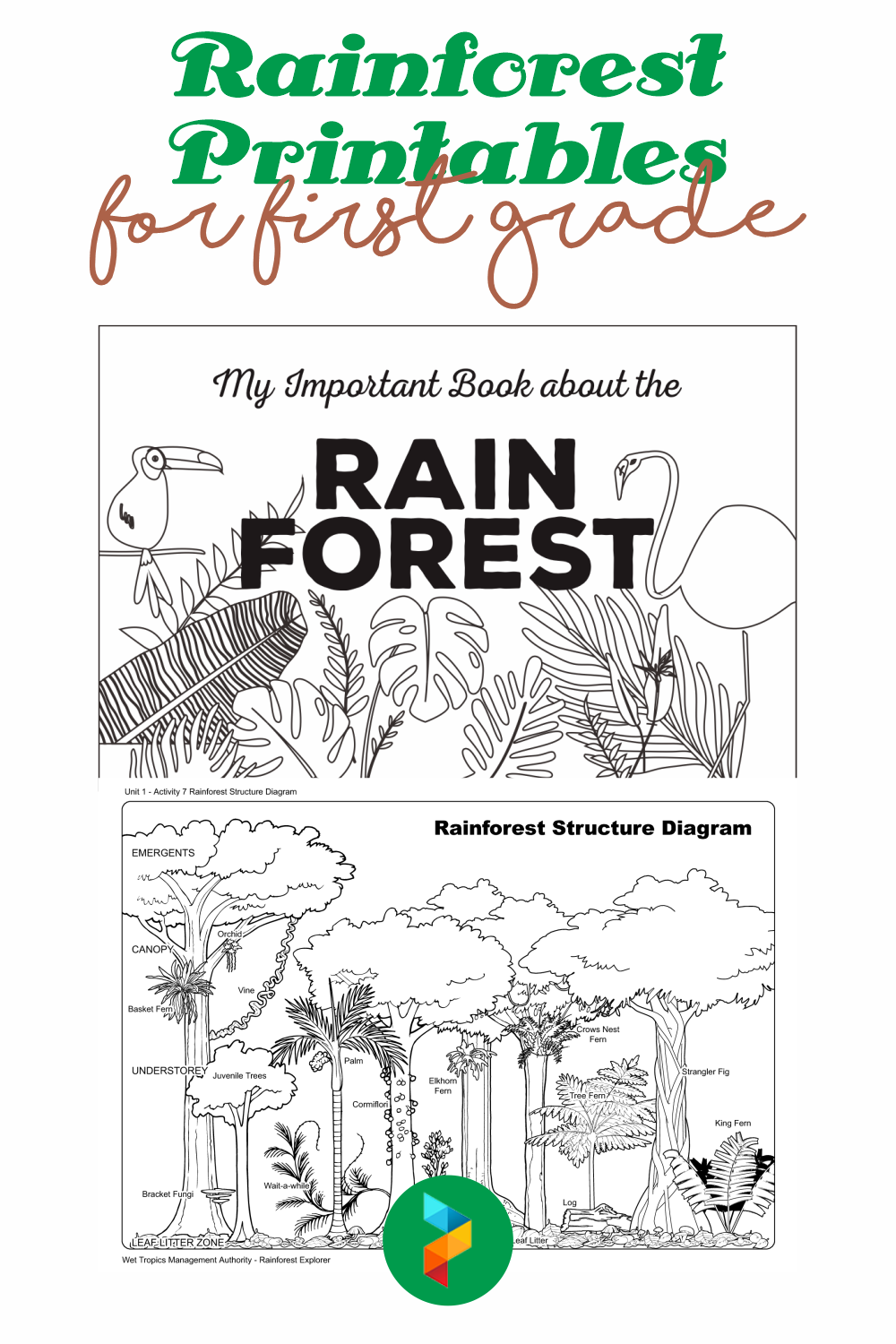 Rainforest Printables For First Grade