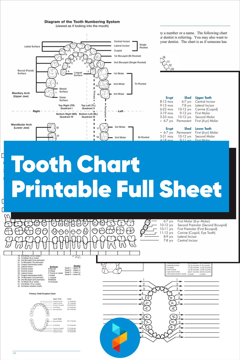 Tooth Chart Printable Full Sheet